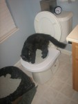 Step 2: Introduce your cat to the seat